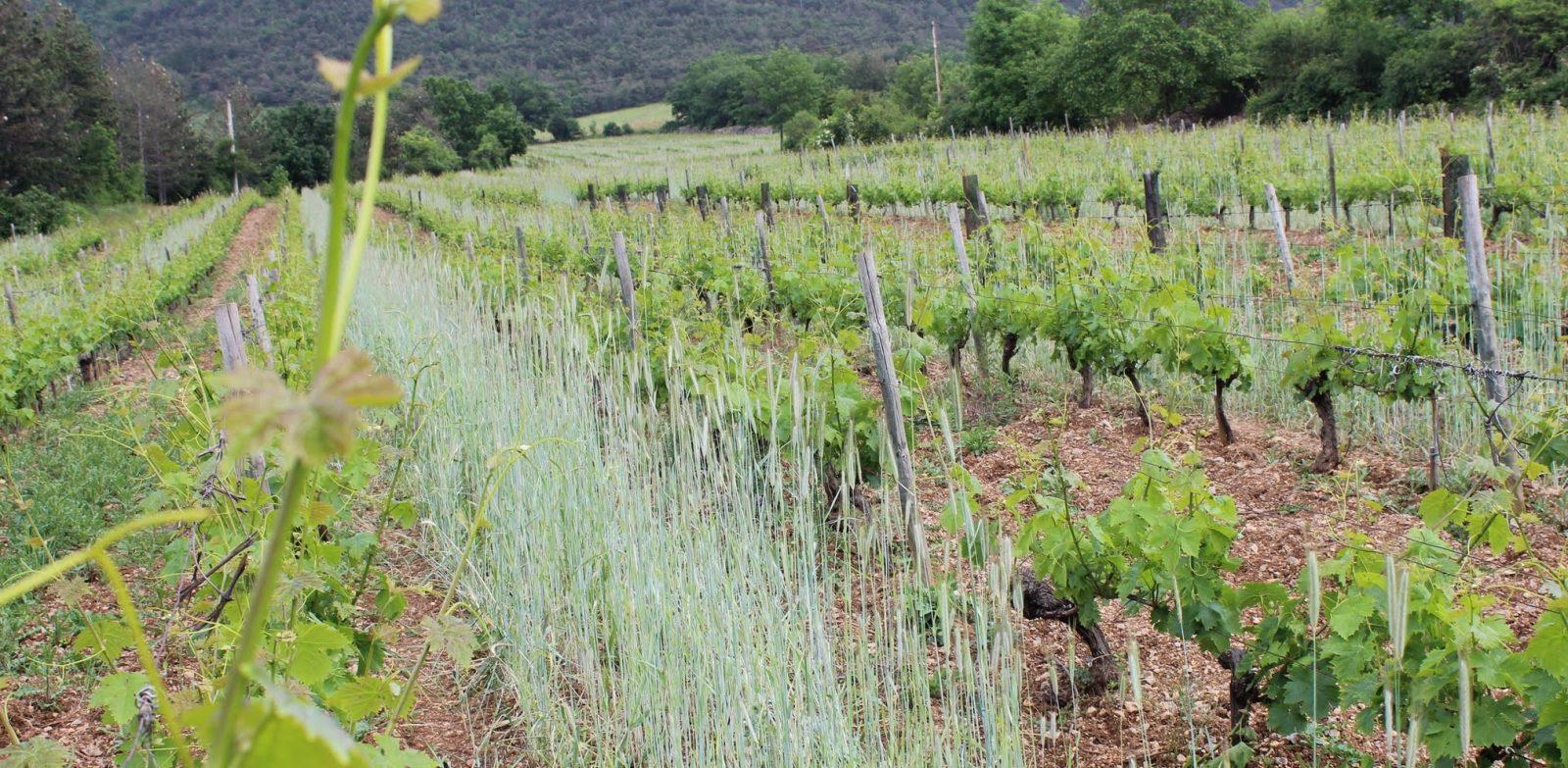 Côté Cairn : de la vigne à la table