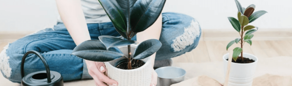 Tout savoir sur les plantes dépolluantes