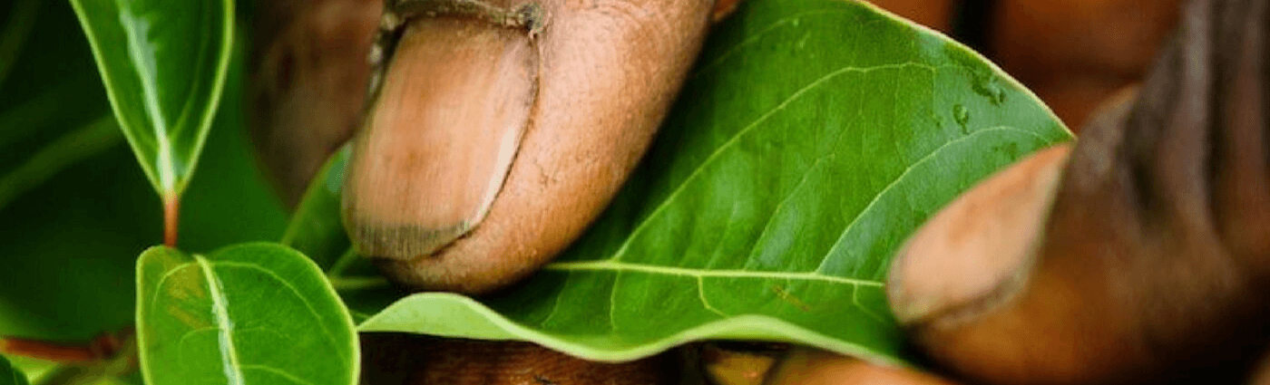 Tristan Imbert, l'homme vert aux feuilles d'or – BeTsara