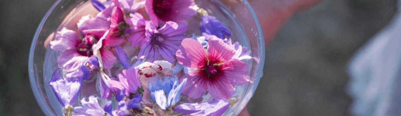Huiles essentielles, plantes et fleurs de Bach : les indispensables bio en période de confinement