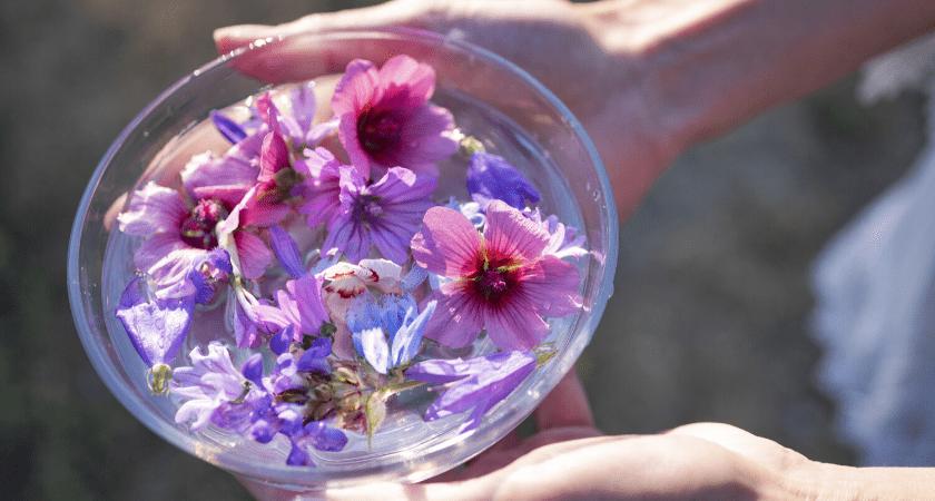 huiles-essentielles-plantes-et-fleurs-de-Bach-les-indispensables-bio-en-confinement